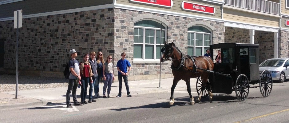 horse&buggy